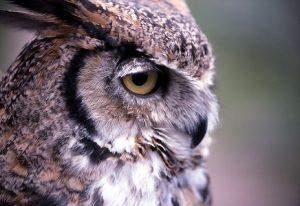 Owl Channel