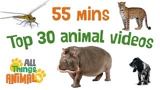 Kids Animal tv